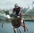 すべてはアントマンにかかってる!?  - Walt Disney Studios Motion Pictures / Photofest / ゲッティ イメージズ