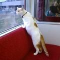 全国初「ねこカフェ列車」の運行決定 殺処分予定の猫の保護活動に貢献