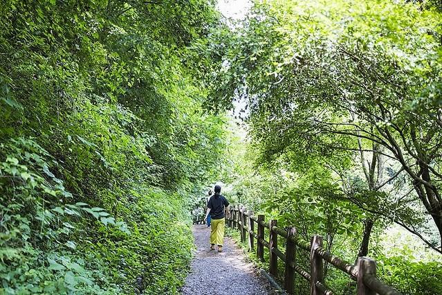 東京唯一の村・檜原村でプチ女子旅! プライベート感満載のツリーハウス、ダイナミックな名瀑に癒やされる