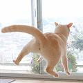 UFOに吸い込まれそうな無重力感 Twitterに投稿された猫写真に反響