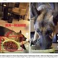 唐辛子入りの餌を与えられる犬(画像は『UNILAD 2020年9月18日付「Influencers Force-Feeding Dogs Online Under Fire After Mukbang Videos Banned In China」(Douyin)』のスクリーンショット)