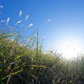 秋の行楽、草むらではツツガムシ病に注...