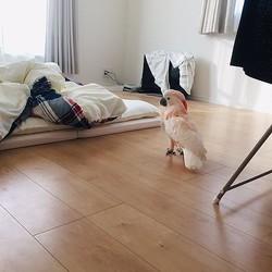 なぜおらん?飼い主と添い寝したかったのに布団にいないことが解せないオウムがかわいい