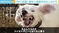 「バイオハザードに出てたと思う」Twitterに投稿された犬の写真が話題