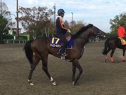 【菊花賞】フィエールマン 絶好調ルメール騎乗で魅力十分