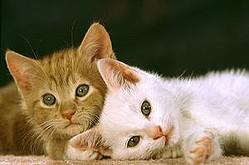 中国メディアは、日本人は「非常に猫好きだ」と主張する記事を掲載し、その理由について分析している。(イメージ写真提供:123RF)
