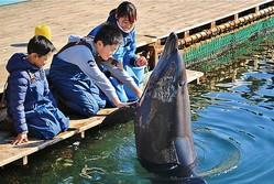 「トレーナー体験」(1人2000円※5歳以上)。イルカとの多彩な触れ合いを楽しもう! / わくわく海中水族館シードーナツ