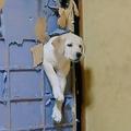 自分たちでペットドアをDIY ふすまを突き破る犬の姿に大爆笑