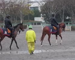 【京成杯】スカイグルーヴ 重賞挑戦で牡馬相手で果たして