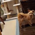 ずっと家にいるからペットが飽き始める?冷たい目線を向ける犬と猫