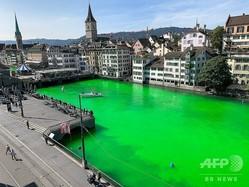 気候変動の危機を訴える「絶滅への反逆」によって、蛍光グリーンに染められたスイス・チューリヒを流れるリマト川。チューリヒ警察提供(2019年9月10日撮影)。(c)HANDOUT / Stadtpolizei Zich / AFP
