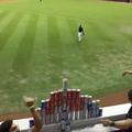外野ファンスに作ったビール缶ピラミッドにボールを投げるよう催促するファン(画像はスクリーンショットです)