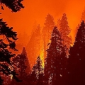 米西海岸一帯で続く山火事の煙が北欧にまで到達したことがわかった/David McNew/Getty Images