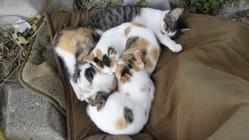 """これが""""猫団子""""だ! あまりの寒さに、集団で暖をとる野良猫さんたち…毛布買い足してあげたい…「ウロボロスか」「混ざりたい」の声"""