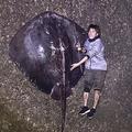 2018年3月に釣り上げられた259cmの巨大ホシエイ 世界記録にも認定