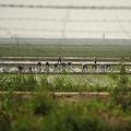 まるで見世物扱い 中朝国境から北朝鮮を覗く「人間サファリツアー」