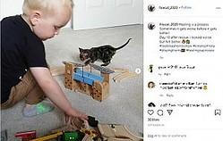 安楽死も考えられた重度の火傷を負った子猫 「生きる力を信じて」動物看護師の息子と遊ぶまでに回復(画像は『firecat_2020 2020年9月26日付Instagram「Healing is a process.」』のスクリーンショット)