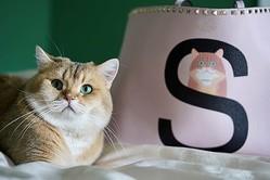 ヴァレンティノからカスタマイズサービス「ロックスタッズ ペット」が登場、バッグにペットのイラストをデザイン