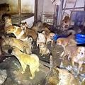 室内で密集する犬たち。体毛は排泄物で汚れていた(読者提供)