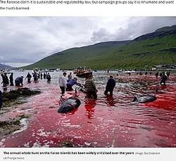 クジラ漁で真っ赤に染まった海(画像は『Mirror 2019年8月5日付「Horror scenes as 23 whales are butchered turning the sea red in Faroe Islands」(Image: Sea Shepherd UK/Triangle News)』のスクリーンショット)