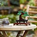 レゴで盆栽を楽しむ「LEGO Bonsai Tree」が発売 日本での小売価格は7000円