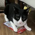 おやつのCIAOちゅ〜るを盗んだ猫 飼い主に発見され「現行犯逮捕」