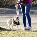 """愛する""""家族""""を失ったとき、姿形が同じ犬を手に入れることができるのなら…… ※写真はイメージです"""