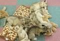 ライオンの赤ちゃん、一気に6頭 2組の...