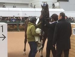 日曜中山3R新馬はアンダープロミスが1番人気にこたえる