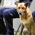 不明女性発見 警察犬に餌6.5kg