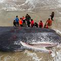 アルゼンチン・サンタクララデルマルの浜辺に打ち上げられた、全長15メートルのクジラ。国営通信TELAM提供(2020年8月8日公開)。(c)AFP PHOTO / TELAM / DIEGO IZQUIERDO