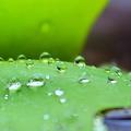 米コロラド州の調査で雨水の9割にプラスチックが含まれていることが分かった/Candice Trimble/CNN iReport