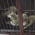 韓国最大の「犬肉」処理場が閉鎖