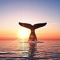 日本が国際捕鯨委員会(IWC)から脱退したことは、中国でも話題になっている。日本人は、それほどまでにクジラを食べたいのだろうか?(イメージ写真提供:123RF)