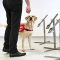 新型コロナのパンデミック収束に向けて「探知犬」が活躍か(画像は『Medical Detection Dogs 2020年3月27日付Instagram「***Dogs could join the fight against COVID-19***」』のスクリーンショット)