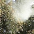 静電気防止スプレーなどが効果的 花粉が衣類につくのを抑える方法