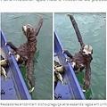 突然現れ岸までボートで移動したナマケモノ(画像は『Gazeta Online 2019年9月2日付「Bicho-preguiça rouba a cena atravessando lagoa em Linhares」(POTO:Anivaldo Pitta)』のスクリーンショット)