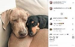 仲良しの2頭(画像は『arnoldandfrank 2020年8月27日付Instagram「Such a ruff day」』のスクリーンショット)
