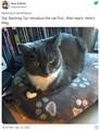 「猫飼ってる?」英教師のオンライン授業で生徒から飛び出した意外な質問