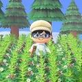 あつ森の「雑草」は意外と使える 島のデザインに取り入れる手も