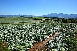 残留農業等の問題で安全性が問われた中国の野菜だが、現在では、現地生産者の改善努力によって日本の基準に合致した野菜が作られているという。(イメージ写真提供:123RF)