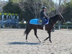 【高松宮記念】ナックビーナス 杉浦師「いい馬場で走らせたい」