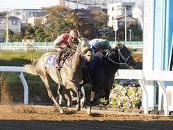 【川崎・川崎記念】JRA出走予定馬
