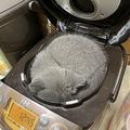 炊飯器の中で丸まる猫