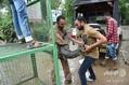 インド西部グジャラート州バドダラで捕獲されたワニ(2019年8月3日撮影)。(c)SAM PANTHAKY / AFP
