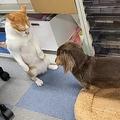 猫が仁王立ちで厳しく叱責?叱られてうつむく犬の様子が話題に
