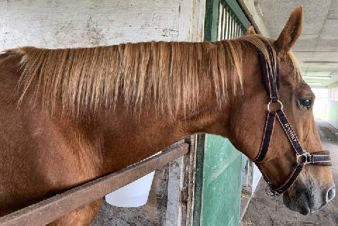 「引退馬の受け入れ難しくなる」 名馬のたてがみ被害、許しがたい理由