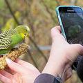 ドイツの大学の研究員などが調査 「最もインスタ映えする鳥」は?