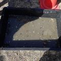 捕まえた魚を保管する容器。泥水の中に、大量の小型魚の死体が浮いている(写真は常川真さん提供)