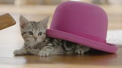 「帽子がUFOになっちゃった♪」が正解(リリースより)